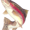 /home/pathp/public_html/nmffg/images/Rainbow_Trout.png /home/pathp/public_html/nmffg/images/Rainbow-Trout-150.png
