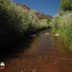 Jemez River Spanish Queen Trout Fishing Public Access